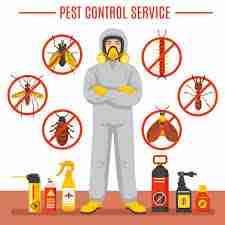 Flea Control Services York